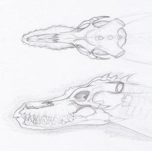 Dragon-skull-study